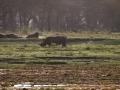 Nashorn-Dämmerung-Lake-Nakuru