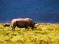 Nashornfamilie-am-Lake-Nakuru-Afrika