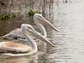 Zwei-Pelikane-Lake-Nakuru-Afrika