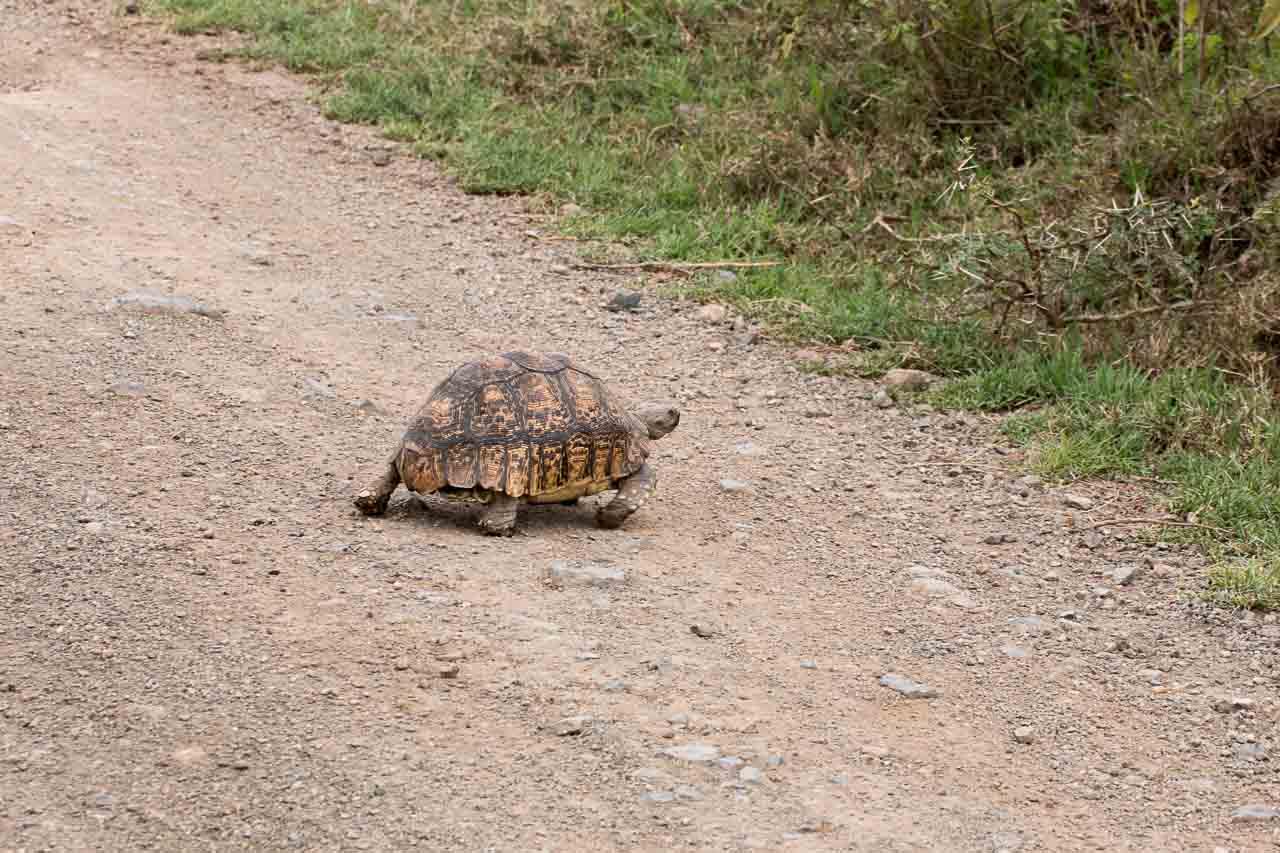 Schildkröte (1)