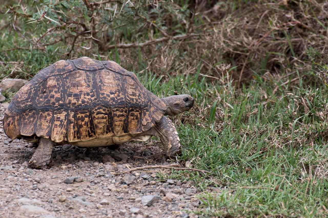 Schildkröte (3)
