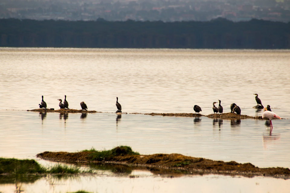 Lake-Nakuru-Vogelgruppe