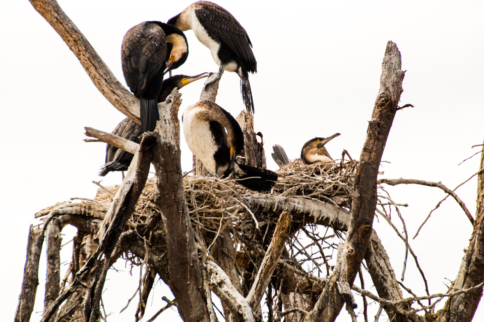 Vogelnest-Safari-Afrika