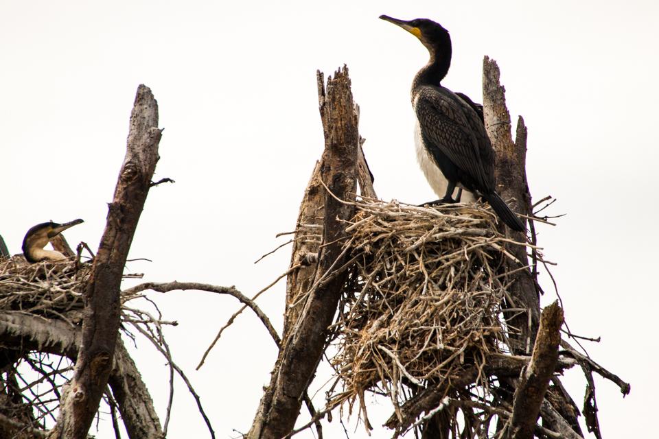 Vogelnest-Safari